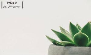 گیاهان-آپارتمانی